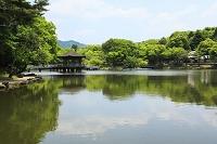 奈良県 新緑の奈良公園 鷺池に浮かぶ浮見堂