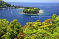 静岡県 新緑と御浜岬