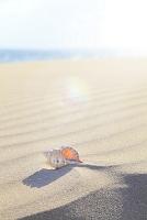 静岡県 夏の伊豆白浜 強風で出来た砂浜の風紋と貝殻
