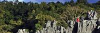 マダガスカル ツィンギ・デ・ベマラ厳正自然保護区