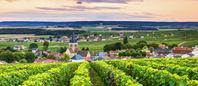 フランス ヴィル=ドマンジュ 春のブドウ畑