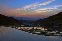 奈良県 早苗の棚田と二上山夕焼け