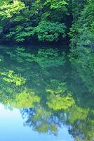 青森県 白神山地 新緑の森と池