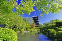 京都府 新緑の東寺