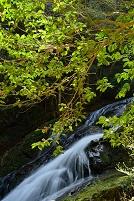 奈良県 曽爾村 済浄坊の滝