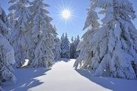 ドイツ ドイル チューリンゲンの森