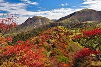 大分県 竹田市 九重山の紅葉したドウダンツツジと三俣山