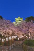 福井県 夜桜の丸岡城
