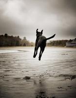 海辺を走る犬