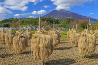 青森県 稲干しと岩木山