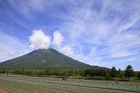 北海道 真狩村 羊蹄山と畑