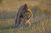 ケニア マサイマラ ナロク県