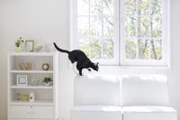 窓辺のインテリアと猫