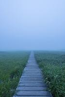 北海道 雨竜沼湿原