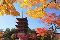 京都府 成相寺 五重の塔と紅葉