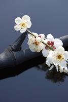 日本 梅の花と竹炭