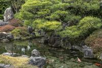 京都府 京都市 城南宮 楽水苑