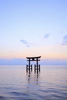 滋賀県 白鬚神社 夜明けの湖中大鳥居と琵琶湖