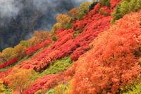 北海道上川町 大雪山黒岳 紅葉