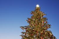 東京 クリスマスツリー