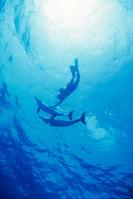 カリブ海 バハマ諸島 グランドバハマ島 マダライルカと人
