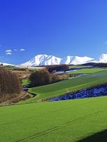 北海道 十勝岳連峰とカラマツの丘