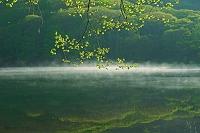長野県 朝霧の古池