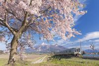福島県 磐梯山 桜