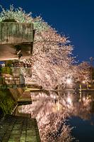 岐阜県 夜桜の四季の広場
