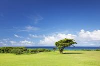 沖縄県 西表島