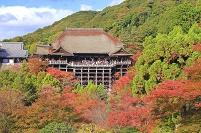 京都府 紅葉の清水寺
