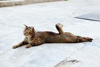 シンガポール 猫の手足
