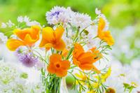 エスコルチアと花