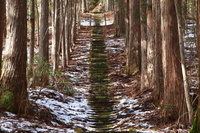 長野県王滝村 雪の石段