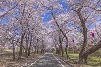 群馬県 赤城南面千本桜
