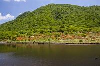 群馬県 覚満淵(赤城山の湿原) レンゲツツジ
