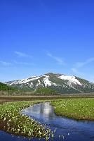 群馬県 尾瀬ヶ原 中田代の下ノ大堀川から望む残雪の至仏山と水...