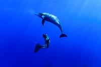 小笠原諸島 ミナミハンドウイルカと泳ぐ女性スイマー