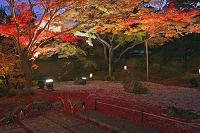 宮城県 松島町 円通院庭園