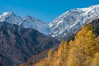 長野県 白馬村の雪山と紅葉