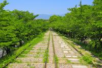 京都府 蹴上インクラインと新緑の桜並木