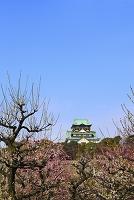大阪府 大阪城公園 梅林と天守閣