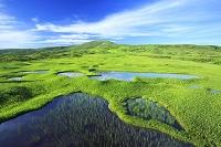 山形県 弥陀ヶ原湿原と月山
