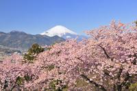 神奈川県 松田山ハーブガーデン