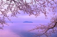 滋賀県 海津大崎