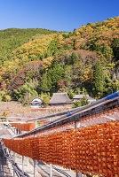 和歌山県 かつらぎ町 干し柿の里