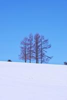 北海道 5本の松