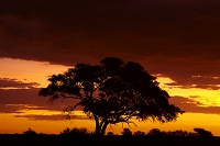 ナミビア エトーシャ国立公園
