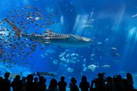 沖縄県 沖縄美ら海水族館