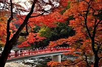 愛知県 紅葉と待月橋 (香嵐渓)